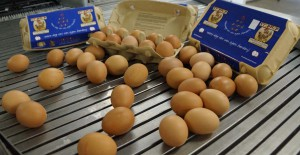 Blauwe-eierdoosje-eierband