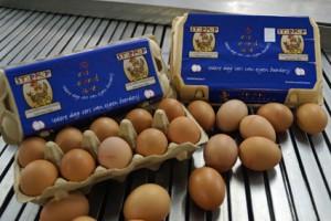 Blauwe-eierdoosjes424